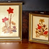 Framed – Pressed Flowers – Set of 3   #WH-111
