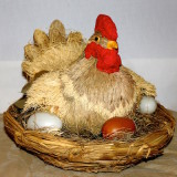 Hen on nest with eggs –  #A&B-9886